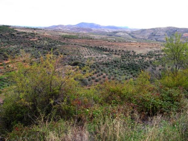 Vista a lo lejos de terrenos de alcornoques. Abiesta á lo luen de zurerals
